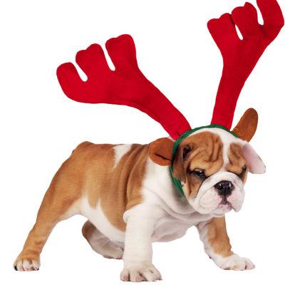 Joulupersoonatestin pääkuva. Kuvassa bulldog punaiset poronsarvet päässä.
