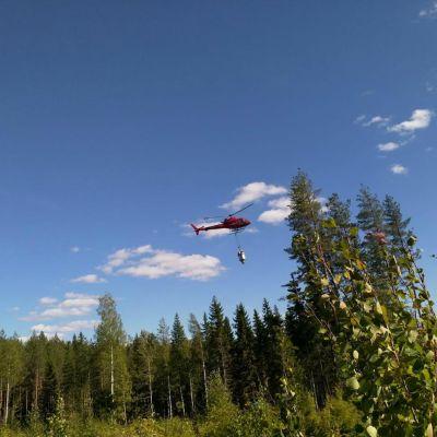 Metsäyhtiö Tornator lannoittaa helikopterilla metsäpalstojaan Liperin Vaiviossa elokuussa 2018. Helikopterilla lannoitetaan pintajuurista kuusikkoa sekä mäkisiä alueita. Traktori sopii pienille palstoille.