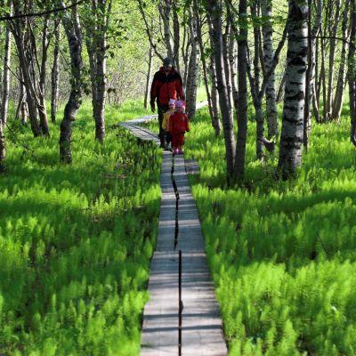 Rovaniemi toivoo seudun luonnon houkuttelevan matkailijoita myös kesällä.