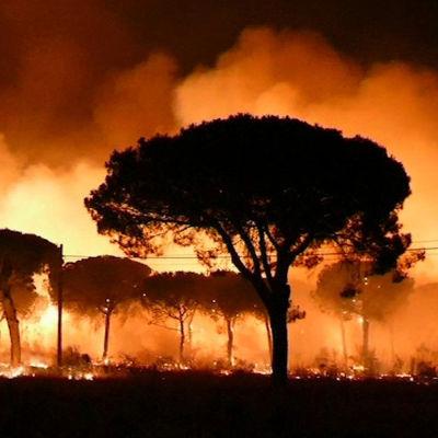 Stora lågor runt träd i La Penuela, Huelva, Spanien den 24 juni 2017.