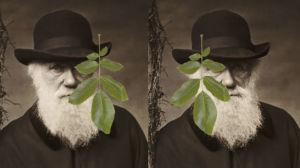 kaksi Charles Darwinin valokuvaa, joiden edessä lehti