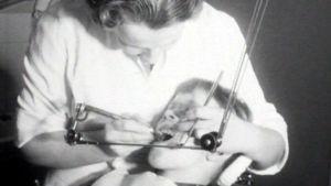 Pojan hampaita hoidetaan (arkistokuva)