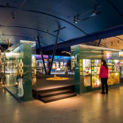 Saamelaismuseo Siida