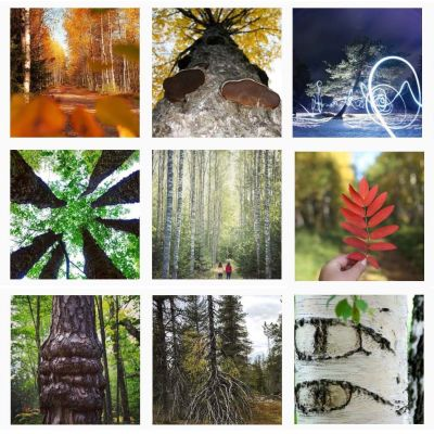 Valokuvia puista.