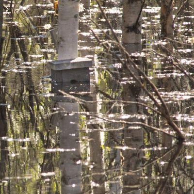 LInnunpönttö veden varassa