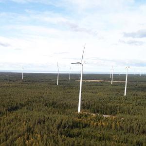 Vindkraftsparken i Kalajoki.