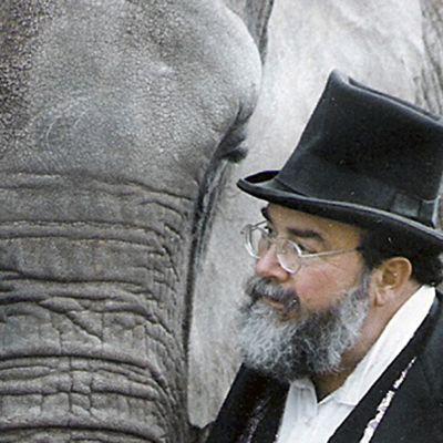 En lycklig elefant