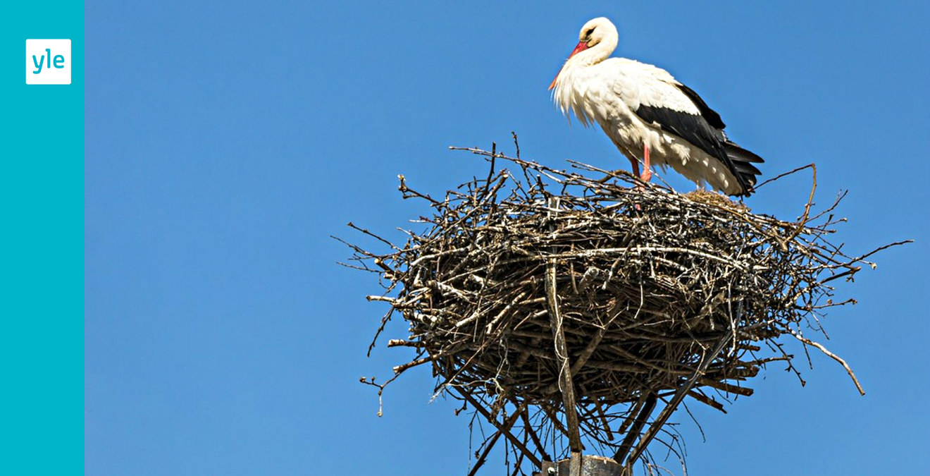 Stork Suomeksi