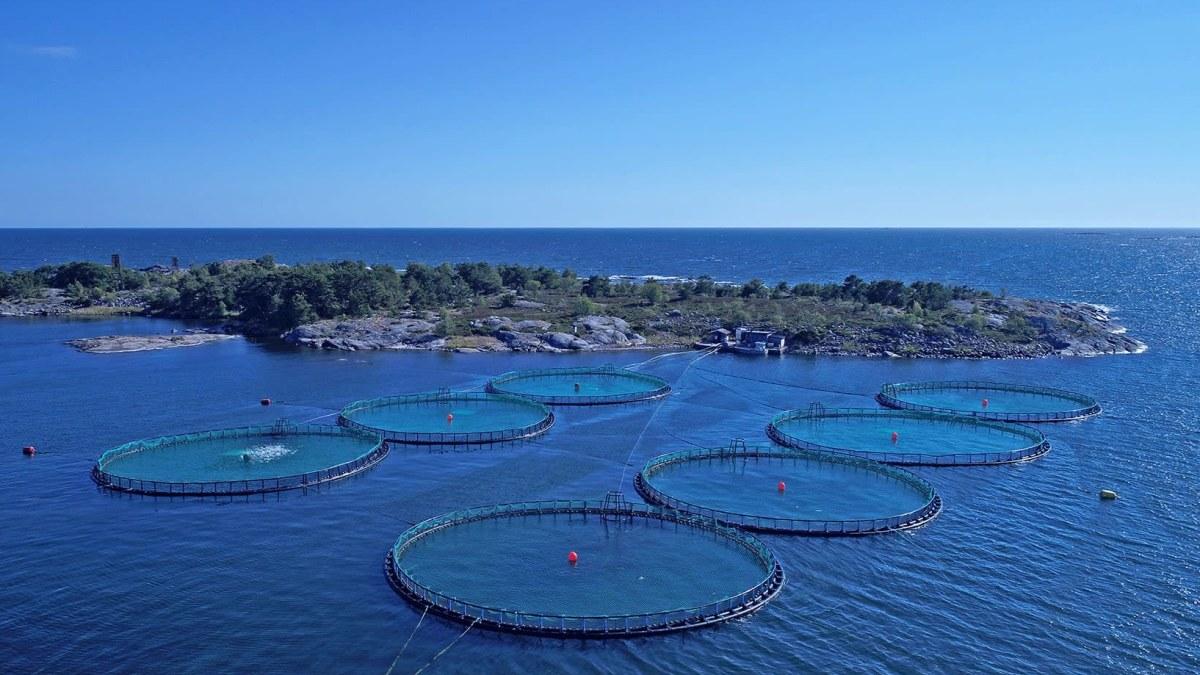 Nordic Trouts fiskodling på Åland.