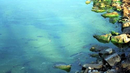 Ofarliga alger i skargarden