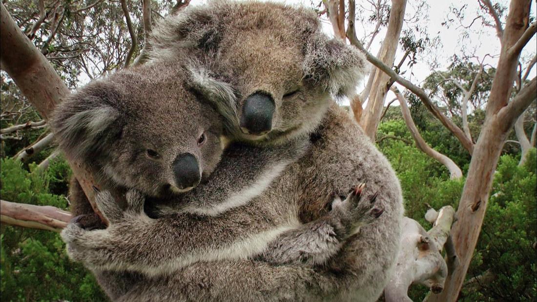 Australia Luonto