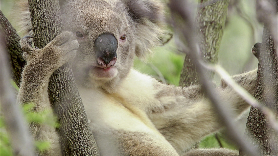 Australia Matka