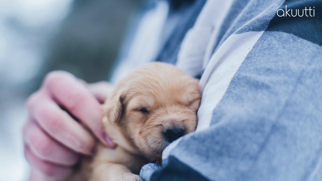 Pidempää ikää ja kivunlievitystä – Viisi tapaa, joilla eläimet parantavat terveyttäsi