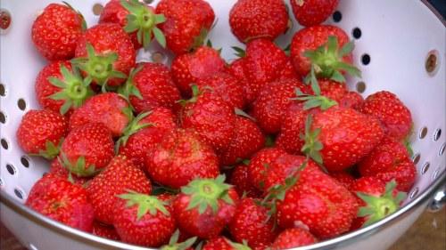 frysa jordgubbar utan socker