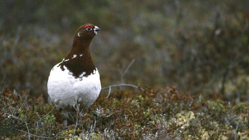 Bigblackcock suku puoli