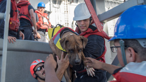 Hund raddad till havs efter tsunamin