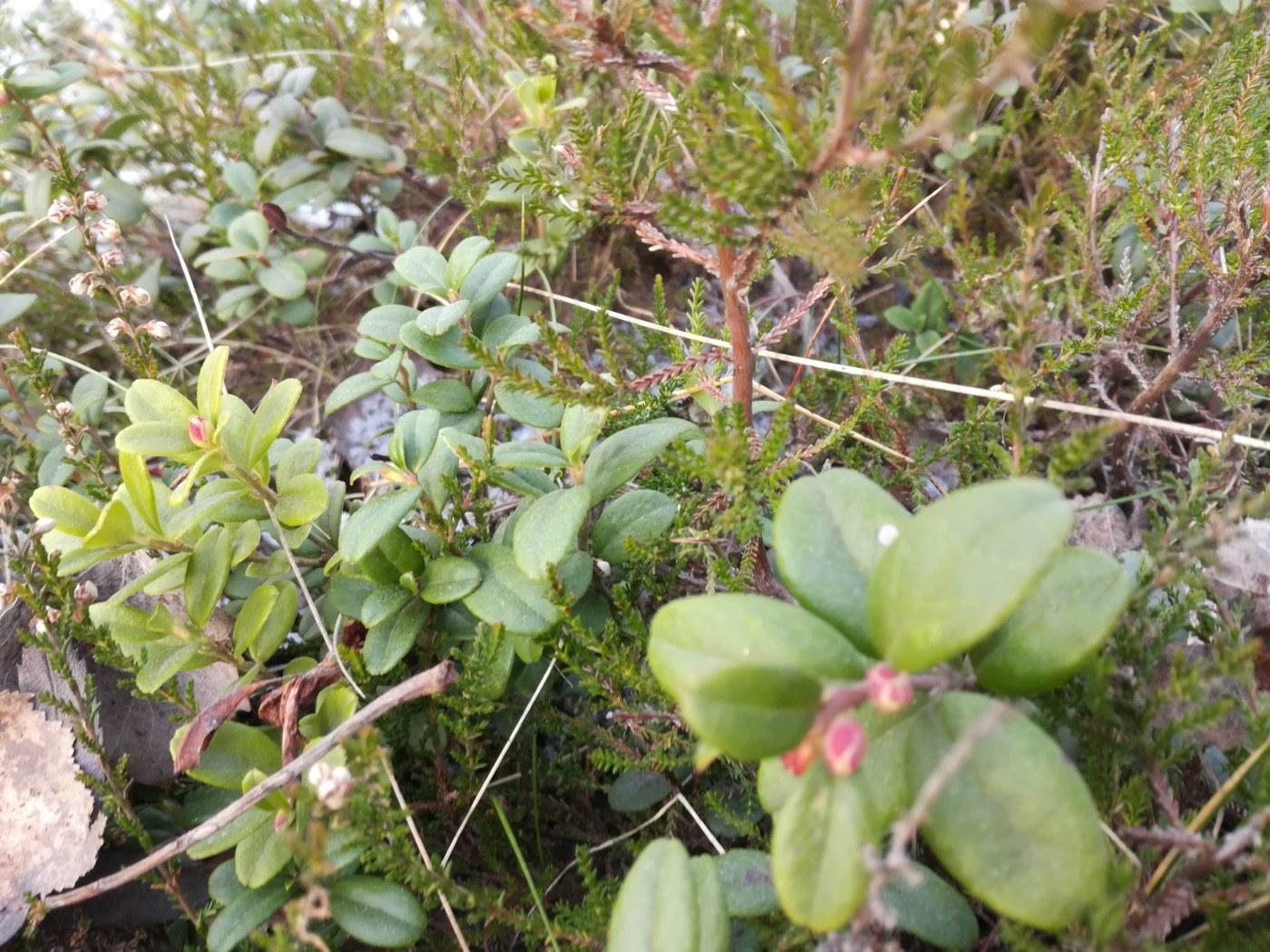 Naturväktarna Bildblogg