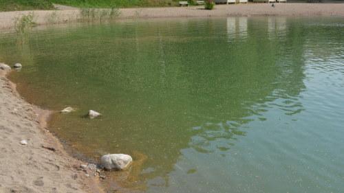 Stor algblomning i bottenviken