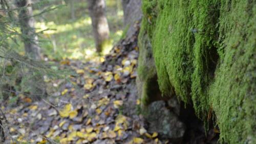 Kvinnan hittades dod i skogen