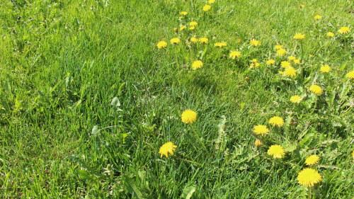 Nu blommar alla allergiker upp