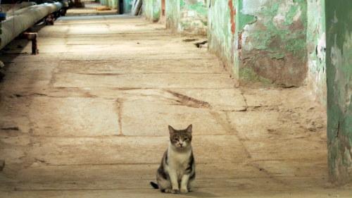 katt kvinna singel laglig ålders gräns för dejting i Australien