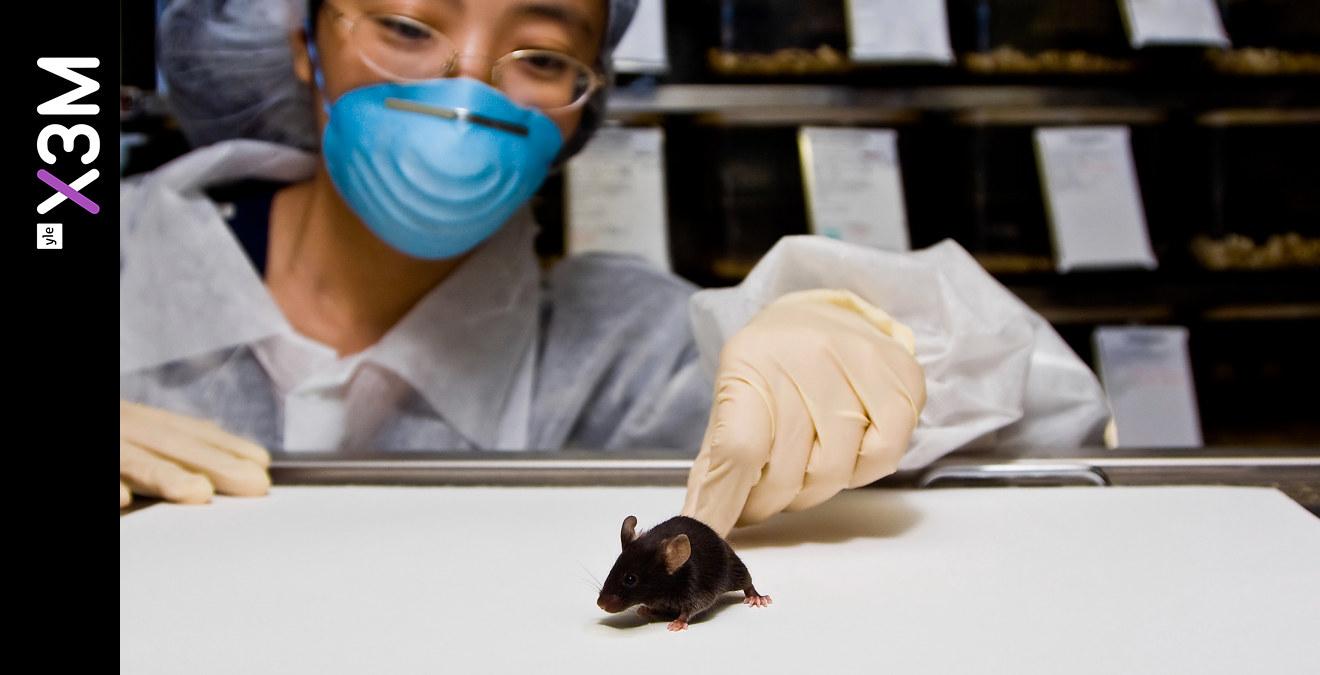 vilka testar smink på djur
