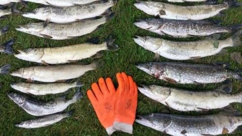 Fiskdod orsakad av syrebrist
