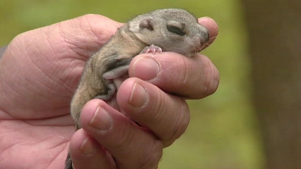 Oravan Poikanen