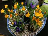 Gipsskålen med blomkrukor i