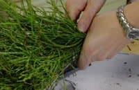 Forma en knippe ris