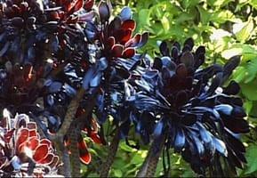 Den svarta trädgården