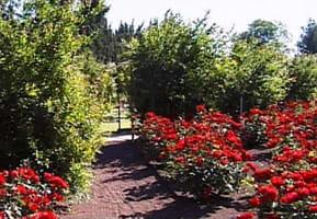 Den röda trädgården