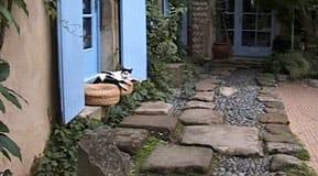 Katterna trivs