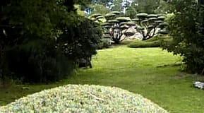 Skulpturala former