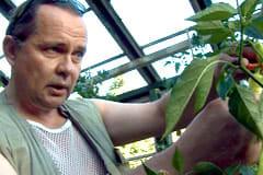 Seppo Sarkkinen skördar chilin