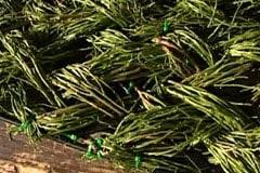 Klipp bort utstående ris för jämna kanter