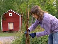 Catharina binder ihop videpinnar