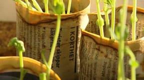 Uppdrivningskrukor i tidningspapper