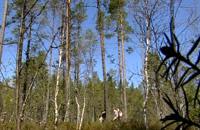 Våt skogsmark