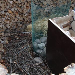Kvistar som bottenmaterial i nyckelhålsodling