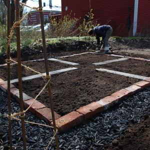 Potager-trädgården på Strömsö med spaljékonstruktionen för rosenbönorna i förgrunden.