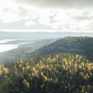 Syksyinen vaaramaisema, järviä ja havumetsää korkealta kuvattuna.