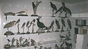 Uppstoppade fåglar hos Äggmannen