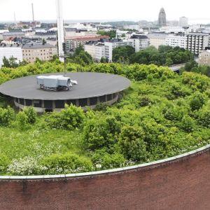 Linnanmäen vesitornin katolla kasvaa metsä