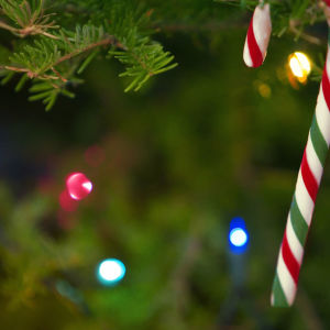 Joulukuusen oksalla koriste