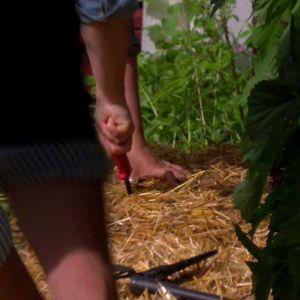 Owe och Camilla skär ut hål för plantorna