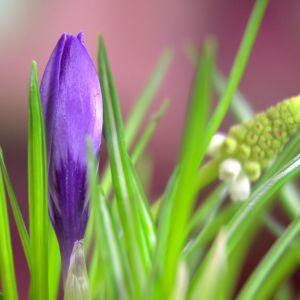 Blomsterarrangemang till påsk