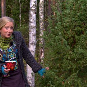Alexandra vid enbärsbuske