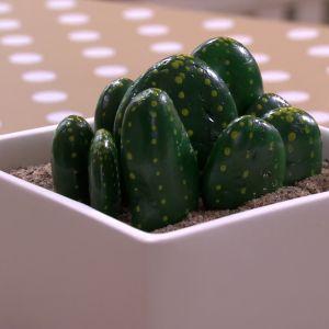 Kaktusar i grusbädd.