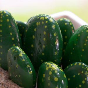 Kaktusar av sten.